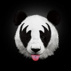 Panda_big