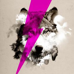 wolf_rocks