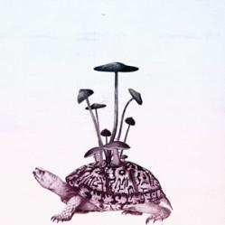 turtle-fin-no-text-small