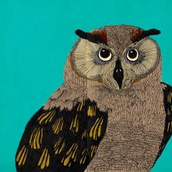 owlcolour-copy